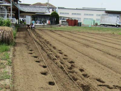 ロープはピーンと張らなければ意味がありませんので、畑の端から端をロープで渡します。