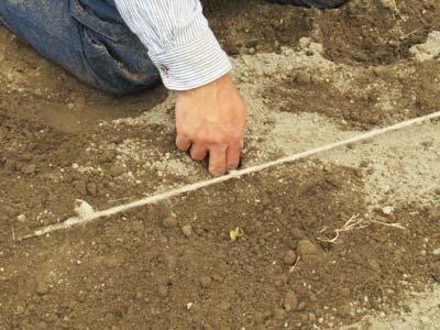 後はロープの結び目を目印に種を蒔きます。