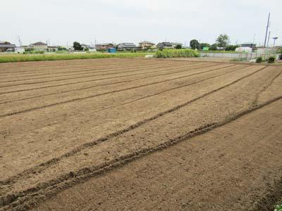 ほうき草の種を3種用意しましたので、種に応じてそれぞれ畑を用意しています。 さぁ、次の畑です。