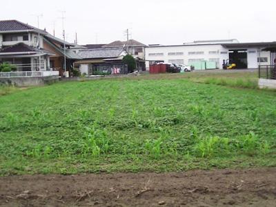 雑草に必要な栄養分を取られ、タカキビの成長が著しく低下しているようです。