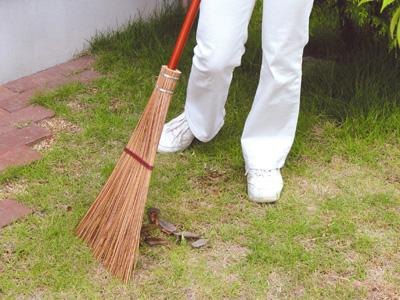 庭や芝生、コンクリート面を掃くのに使われている箒です。落ち葉などの掃き掃除に便利な葉脈箒